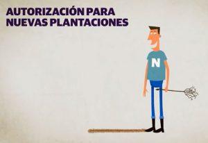 nuevas-plantaciones-vinedo