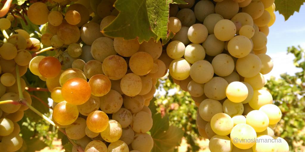 precio uva