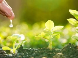 como afecta el cambio climático en la agricultura