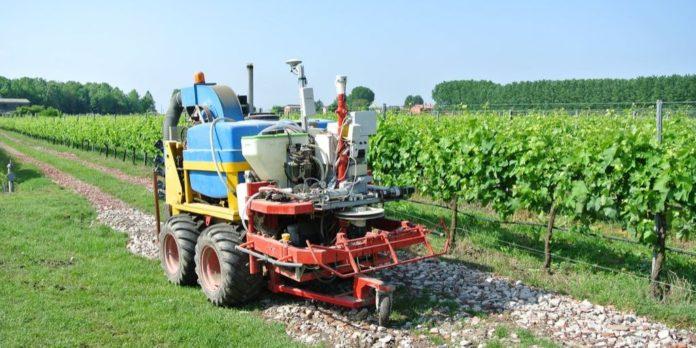 robot para el viñedo viña vid