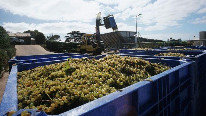 precio uva valdepeñas