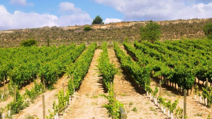 autorizaciones de plantación de viñedos