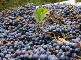 costes produccion uva españa