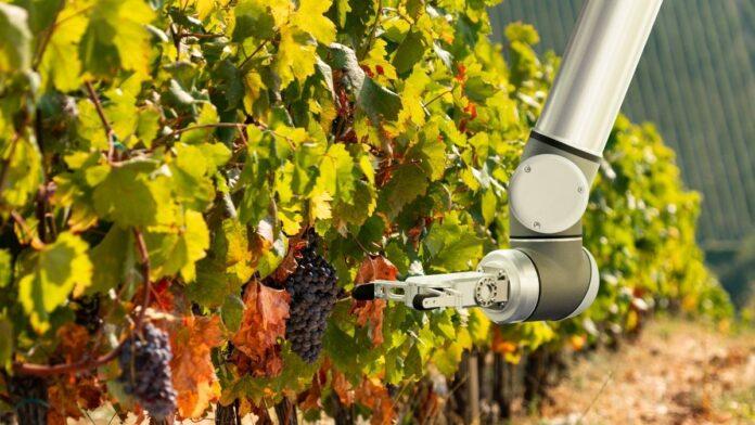 digitalización viticultura