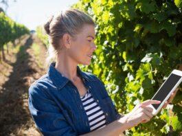 hub digitalizacion y vino bodegas