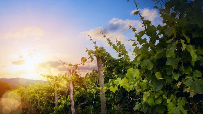impulsar agricultura ecológica
