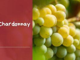 caracteristicas uva chardonnay variedad vinos