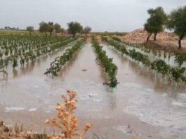 daños viñedo dana tormentas castilla la mancha toledo cuenca albacete ciudad real