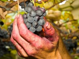 producción vino castilla-la mancha